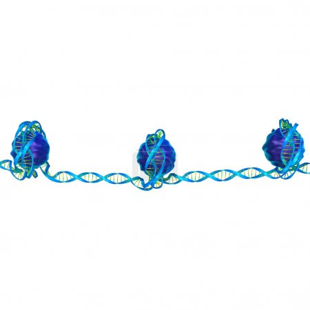 Nucleosome, DNA packaging