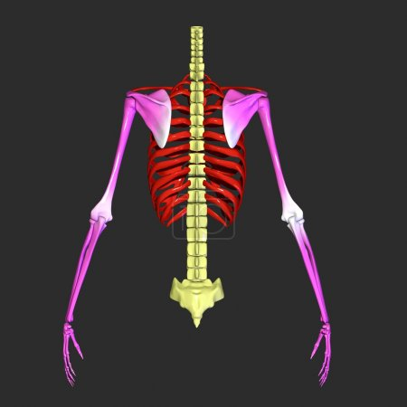 Skeleton hands