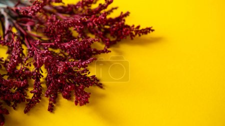 Photo pour Fond jaune et fleurs rouges séchées avec espace pour le texte. Contexte pour le message d'automne. Photo de haute qualité - image libre de droit