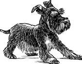 puppy of schnauzer