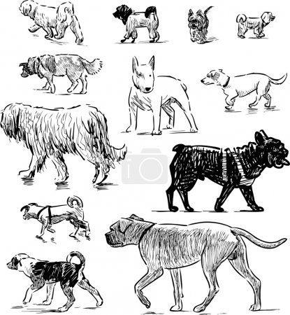 sketches of different dogs