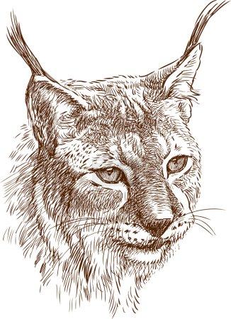 Illustration pour Image vectorielle du portrait du lynx . - image libre de droit