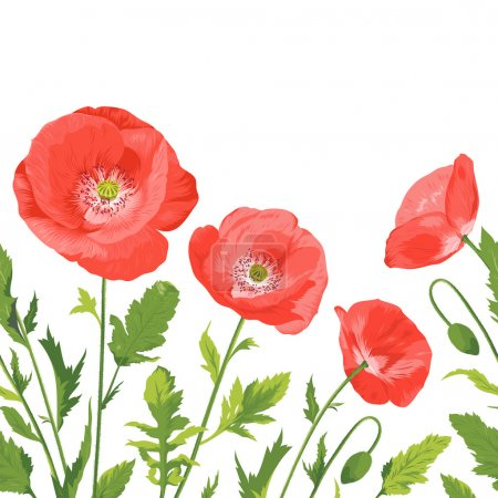 Poppies bouquet, seamless border composition