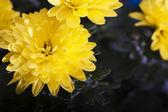 D žluté květy