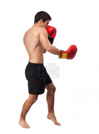 Young boxer man