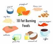 top ten fat burning fat foods vector illustration