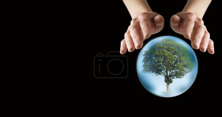 What does the future hold for our trees