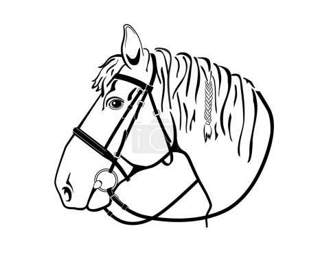 horse head in harness, black and white drawing