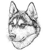 Sketch of Husky Dog