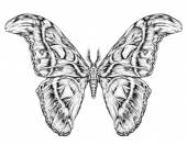 Detailed realistic sketch of a butterfly