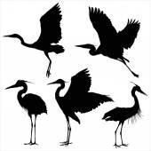 Silhouettes of beautiful  heron