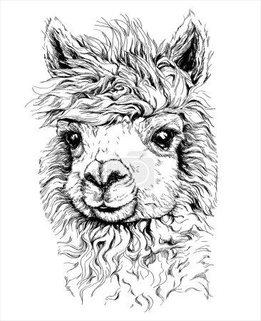 Realistic sketch of LAMA Alpaca