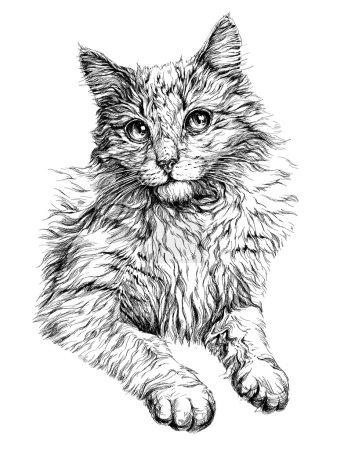 Illustration pour Portrait de chat. Illustration vectorielle dessinée main - image libre de droit