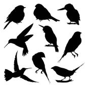 Silhouettes of Birds -  big set