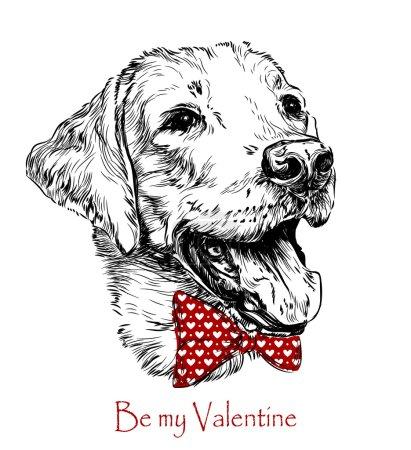Illustration for Vintage retro hipster style sketch of funny Labrador dog. vector illustration. - Royalty Free Image