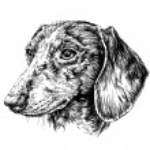 Sketch of Dog Dachshund. Vector Illustration...
