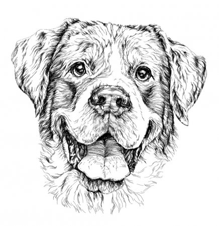 Sketch of funny shepherd dog