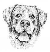 Sketch of funny shepherd dog vector illustration