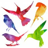 Birds Silhouette watercolor