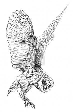 Illustration for Sketch of Barn owl. isolated on white vector illustration - Royalty Free Image
