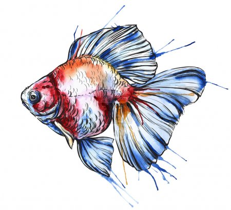 Illustration pour Belle illustration d'aquarelle vectorielle Goldfish. Isolé sur blanc - image libre de droit