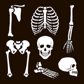 Collection Human Skeleton  Vector  illustration white set