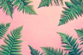 """Постер, картина, фотообои """"Летний тропический фон, листья папоротника"""""""