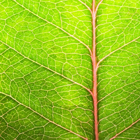 Photo for Green leaf texture background close-up - Royalty Free Image