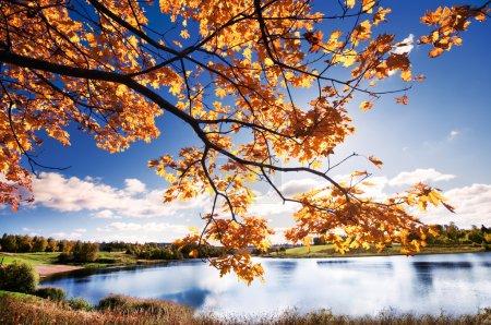 Photo pour Beau paysage d'automne avec les arbres lumineux dans parc - image libre de droit