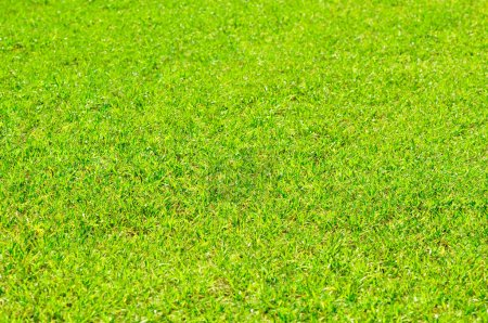 Photo pour Lumineux fond d'herbe verte - image libre de droit
