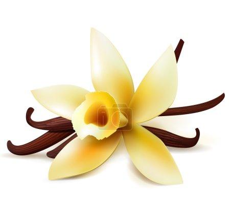 Illustration pour Fleur de vanille réaliste et gousses isolées sur fond blanc - image libre de droit