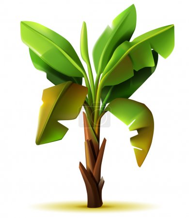 Illustration for Vector realistic isolated banana tree on white background - Royalty Free Image