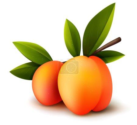 Two ripe peaches
