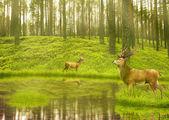 Jelení babek v létě sametové postavení v otvoru v lese