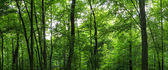 Huge forest panorama