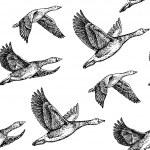 Flying geese. Hand drawn illustration vintage patt...
