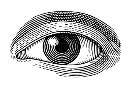 Illustration for Vector illustration of human eye in engraved style - Royalty Free Image