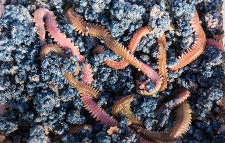 A box of fishing worms pics,