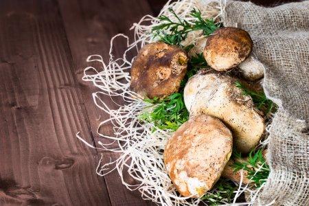 Photo pour Champignons représentés (Boletus edulis, Porcini) - roi des champignons pores, placé sur de la paille et un sac de jute sur un fond en bois . - image libre de droit