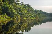 Řeka Amazonka deštný prales, Peru, Jižní Amerika
