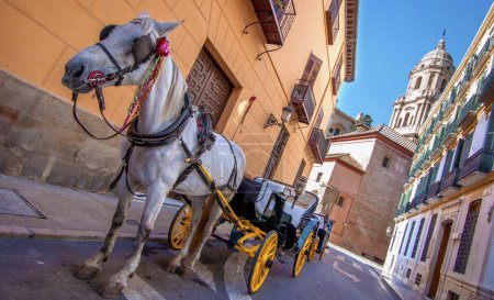 Horse and carriage in the city streets in Malaga, Spain