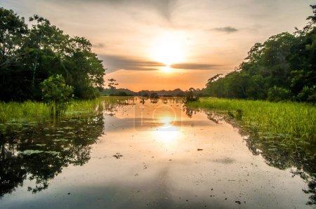 Photo pour Rivière dans la forêt amazonienne au crépuscule, Pérou, Amérique du Sud - image libre de droit