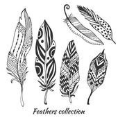 stylized feathers vector collection