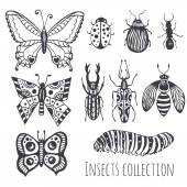 Collection of hand drawind insects