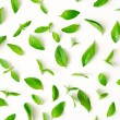 Fresh mint leaves scattered on white background...