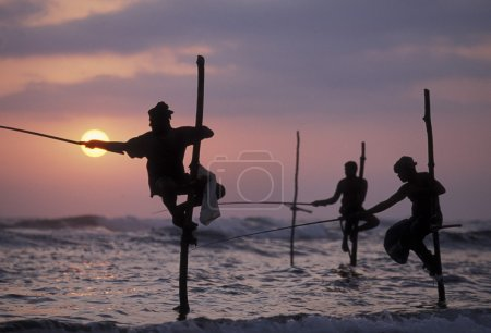 Photo for Fishermen at the coast of Weligama in the southwest of Sri Lanka in Asien. - Royalty Free Image