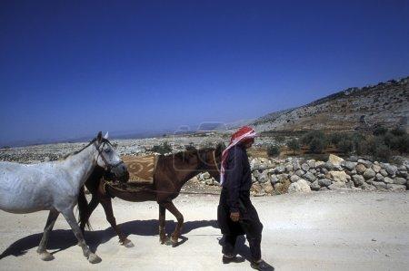 Photo pour Agriculteur arabe avec des chevaux près de la ville d'Alep en Syrie au Moyen-Orient - image libre de droit