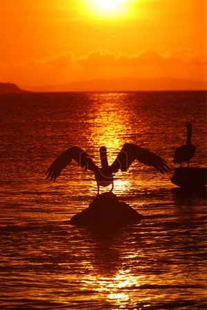 two pelicans sitting on stones in sea