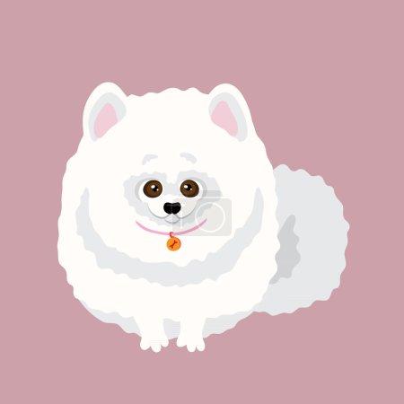 Japanese Spitz dog.