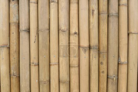 bamboo wall texture background natural color